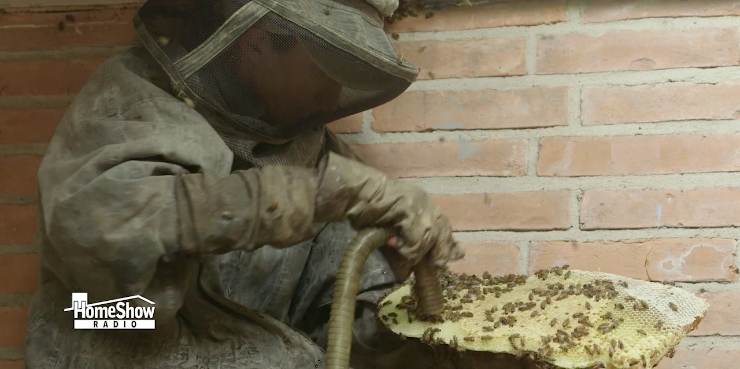 Bees Removal: Gold Award Winner